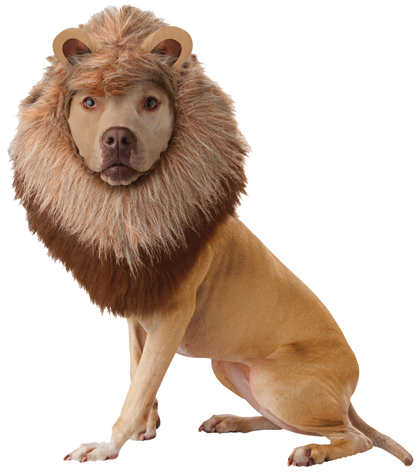 Featured Image for Pet Lion Large
